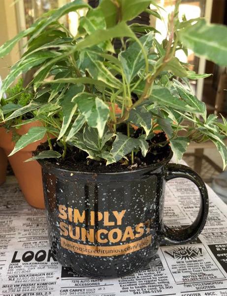 El personal de Suncoast Credit Union regaló plantas a los residentes del hogar de ancianos Royal Palms durante el té en el marco de los trabajos voluntarios
