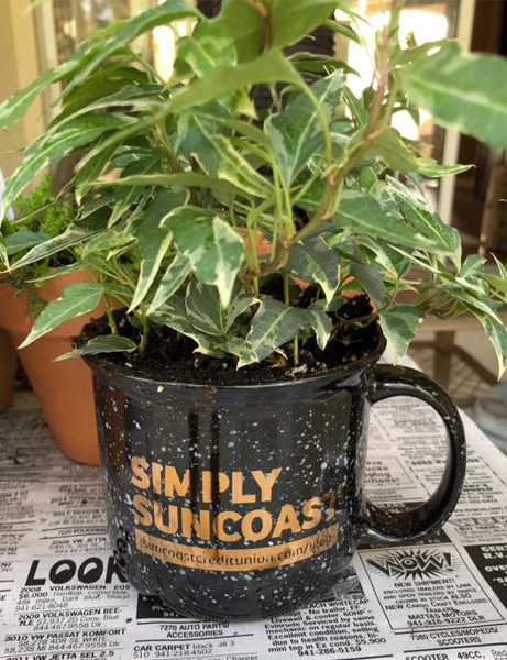 Suncoast Credit Union staff gave live plants to residents of Royal Palms Retirement Home during the Tea Party volunteering event