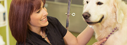 A small business pet spa owner brushes a dog's fur