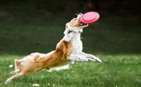 ¡Saltos de perros!