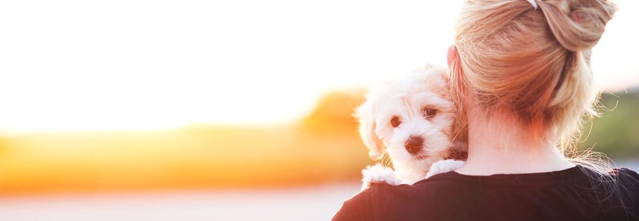 Obtenga un seguro para su mascota y demuéstrele cuánto la ama